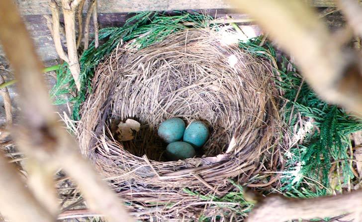 Observa los hábitos de los pájaros mientras visitan tu patio