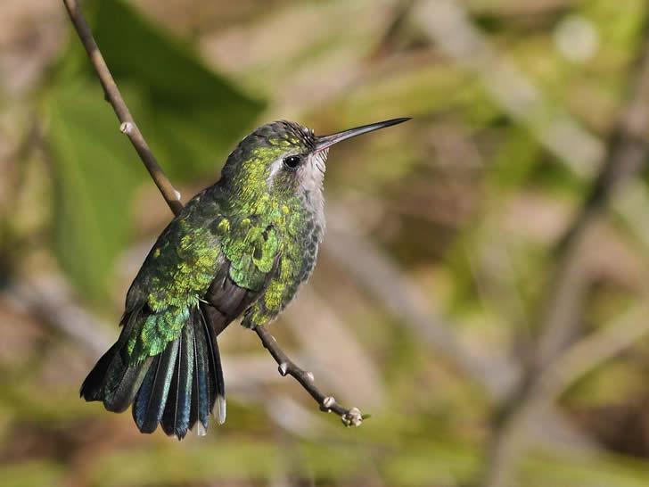 Crea un espacio amigable donde aves de distintias especies puedan alimentarse, refugiarse y anidar