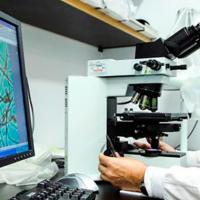"""Descubren 145 genes """"externos"""" que prueban que nuestro genoma no es del todo humano"""
