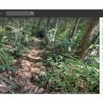 Google Street View propone su último recorrido con máxima tecnología: la selva amazónica