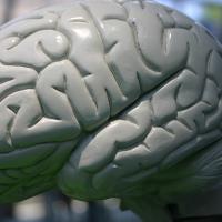Científicos descubren que el olvido es inducido por nosotros mismos y no un acto ajeno a la voluntad