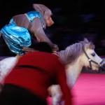 Cierran decenas de circos en México y miles de animales languidecen por nuevas medidas proteccionistas