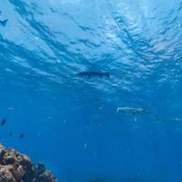 Google Street View recorre el mundo submarino brasileño más ignoto: Fernando de Noronha