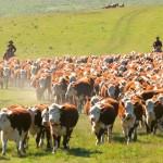 Ruralistas reclaman más medidas de seguridad para combatir muerte de ganado