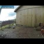 Curiosas reacciones de animales en la granja, durante el eclipse total de Sol en Europa