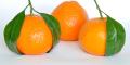 La mandarina es ideal para la merienda en la escuela