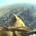 1 millón de visitas en YouTube para vuelo de un águila desde el edificio más alto del mundo: el Burj Khalifa, de Dubái con 828 metros.