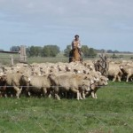 Rurales reclaman que Impuesto de Primaria lo paguen aquellos con más de 500 hectáreas y no 300 como plantea Tabaré