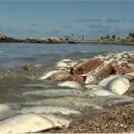 La DINARA continúa investigando las causas de la muerte de más de 20 toneladas de pescado
