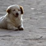 Gobierno resuelve capturar y retirar perros salvajes de colonia Etchepare y no sacrificarlos