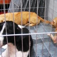 ONGs retiraron unos 100 perros de colonias Etchepare y Santín Carlos Rossi