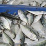 Uruguay exportó 70.000 toneladas de productos de pesca en 2014