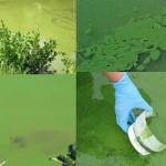 El gobierno no descarta aumentar inspectores para evitar que industrias contaminen el Santa Lucía