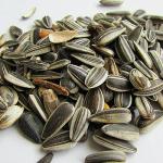 Las semillas de girasol son deliciosas y buenas para el organismo