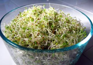 Propiedades y beneficios de la alfalfa