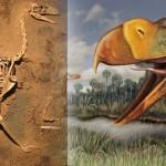 """Argentina: el ave """"del terror"""" más completa jamás hallada explica misterios que tienen 3,5 millones de años"""