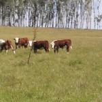 Asociación Rural asegura que el sector agropecuario triplicó el pago de impuestos