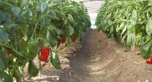 """Falta de lluvias no afecta """"en gran medida"""" al sector de la granja"""