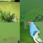 En medio de cuestionamientos políticos DINAMA afirma que controles ambientales aumentaron un 80 por ciento