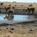 Preocupa al gobierno sequía por riesgos de incendio y dificultades para el agro y energía