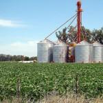 Preocupa al gobierno la escasez de lluvias y sus efectos negativos en el rendimiento de la soja
