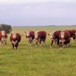 El valor de la tierra para uso agropecuario aumentó 12% en un año