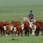 Tabaré Vázquez y Asociación Rural acuerdan aportar mayor competitividad a sector de los agronegocios