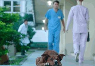 Campaña argentina busca concientizar sobre la donación de órganos
