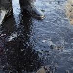 California decreta estado de emergencia por derrame de medio millón de litros de petróleo en su costa de playas