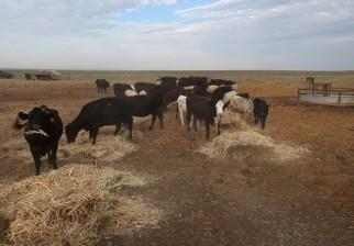 El gobierno declaró emergencia agropecuaria para el este del país debido a escasez de lluvias