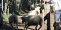 Ministerio de Ganadería extendió medidas para ovinos y para verdeo de praderas