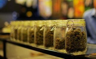 "Gobierno aguarda ""sin prisa"" que farmacias culminen documentación para venta legal de marihuana"
