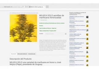 """Científicos cultivan marihuana """"relajante y duradera"""": llega el """"Mujica Gold"""" para fumadores exigentes"""