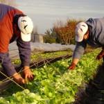 Gobierno otorgará préstamos blandos a productores familiares afectados por las sequías