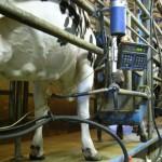 Aumentaron exportaciones de productos lácteos en primeros cuatros meses de 2015