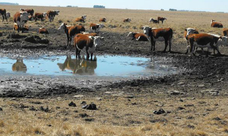 """Productores afirman que esta """"sequía feroz"""" generó pérdidas irreversibles"""