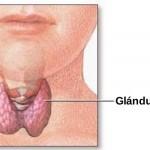 Día Mundial de la Tiroides pauta urgencia de información para afecciones que alcanzan al 10% de la población