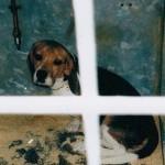 16 Premios Nobel y 149 entidades científicas contra 1 millón de firmas ciudadanas por uso de animales en laboratorio