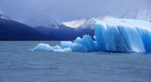 Según estudio especies marinas migrarán fuera del hábitat natural debido al calentamiento global