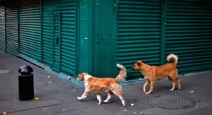 Se conmemora hoy Día Internacional del Perro Callejero