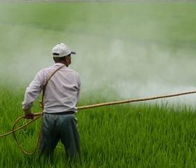 """OMS califica """"posible cancerígeno"""" al herbicida 2,4-D, de los agrotóxicos más usados en Argentina y Uruguay"""