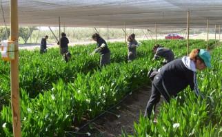 Parlamento restituye el Impuesto de Primaria a productores rurales, tras aprobar proyecto de Ley
