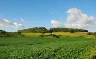 La cosecha de soja en Uruguay supera los 3.2 millones de toneladas