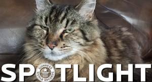 """Libro Guinness de los Récords galardona a """"Corduroy"""" como el gato más longevo del mundo: cumplió 26 años"""