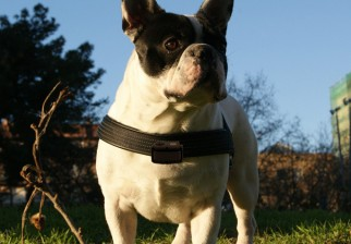 Mascotas: Collares electrónicos de prevención veterinaria controlan salud y eventuales dolores en animales domésticos