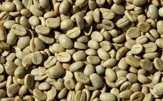 Propiedades y beneficios del café verde. Foto: Pixabay