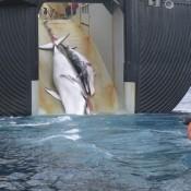 Japón reanuda su cacería de ballenas en 2016 pese a condena de la Corte Internacional de Justicia