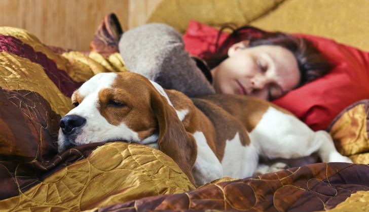 dormir-mascotas