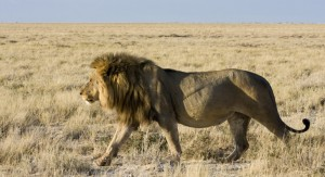 Oficialistas se defienden ante las críticas de la oposición por gastos del viaje a Zambia