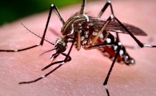 Primer caso de contagio sexual del zika altera esquema preventivo a nivel global y retrasa plan de contención